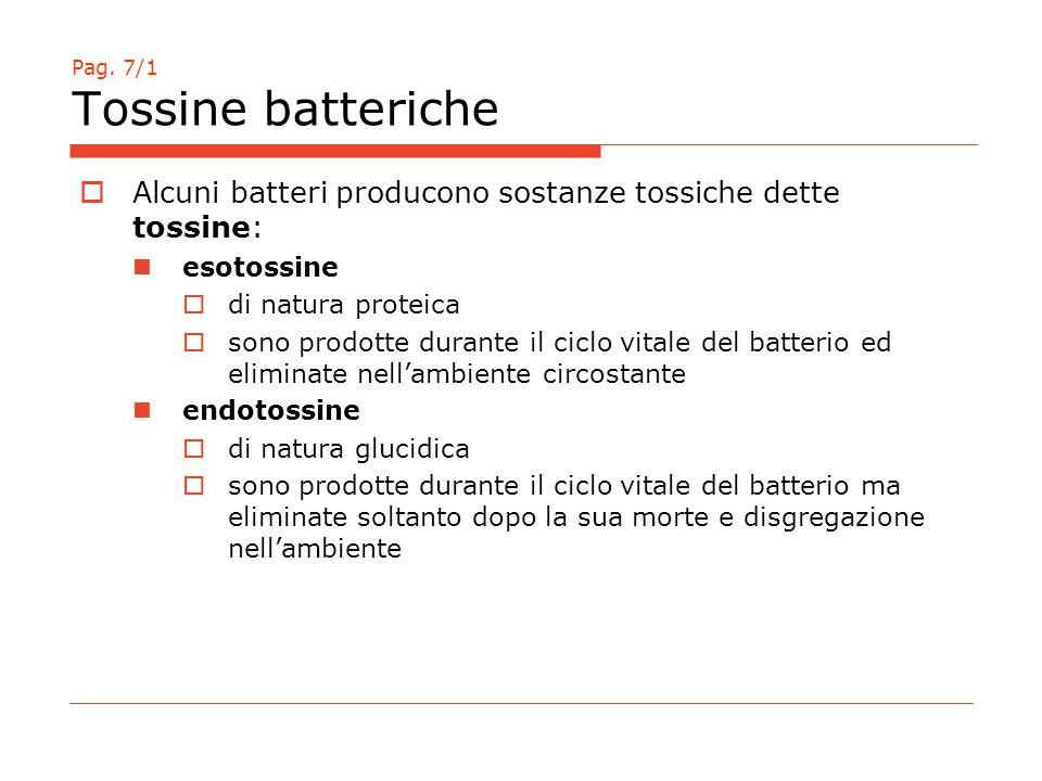 Pag. 7/1 Tossine batteriche  Alcuni batteri producono sostanze tossiche dette tossine: esotossine  di natura proteica  sono prodotte durante il cic