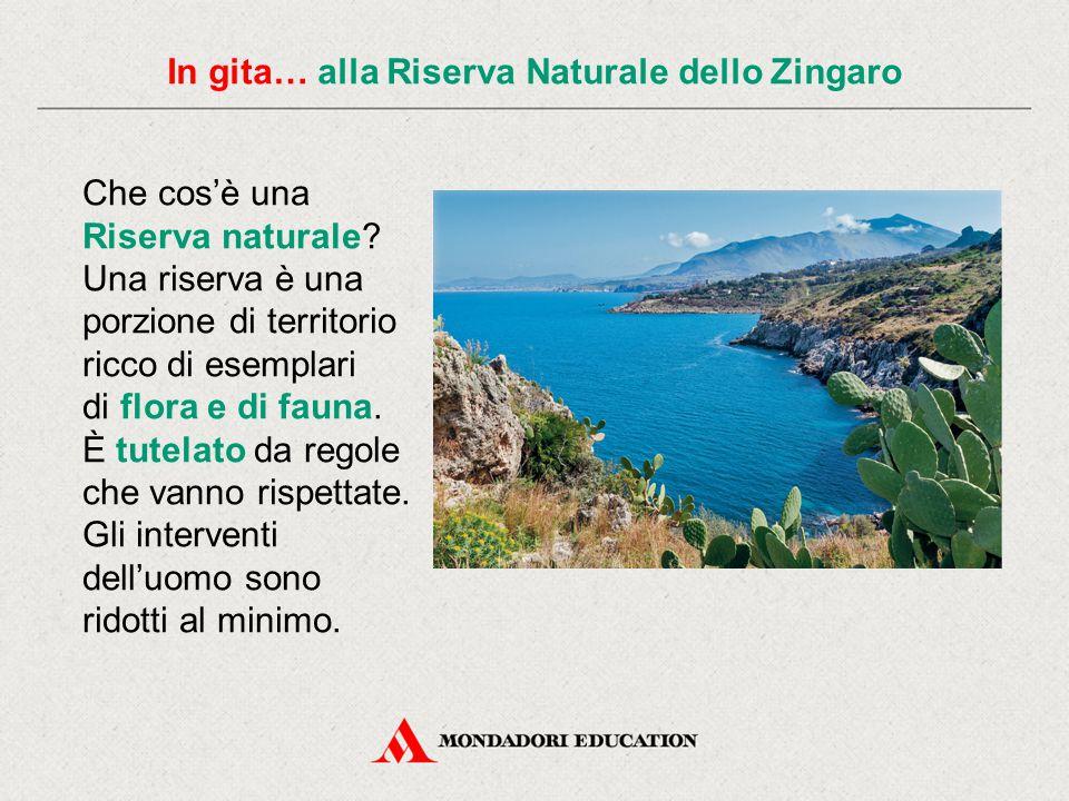 In gita… alla Riserva Naturale dello Zingaro La Riserva Naturale dello Zingaro si trova in Sicilia e comprende un importante tratto di costa che si affaccia sul mare.