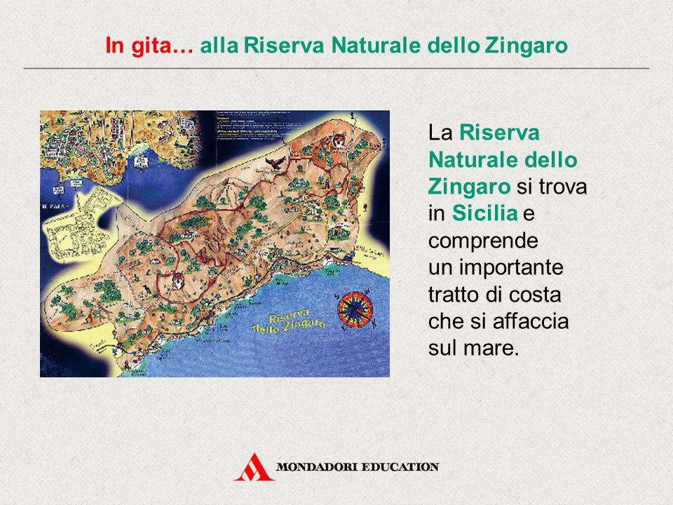 In gita… alla Riserva Naturale dello Zingaro Frassineti, mandorleti, oliveti e i resti di vigneti costituiscono il paesaggio della riserva.