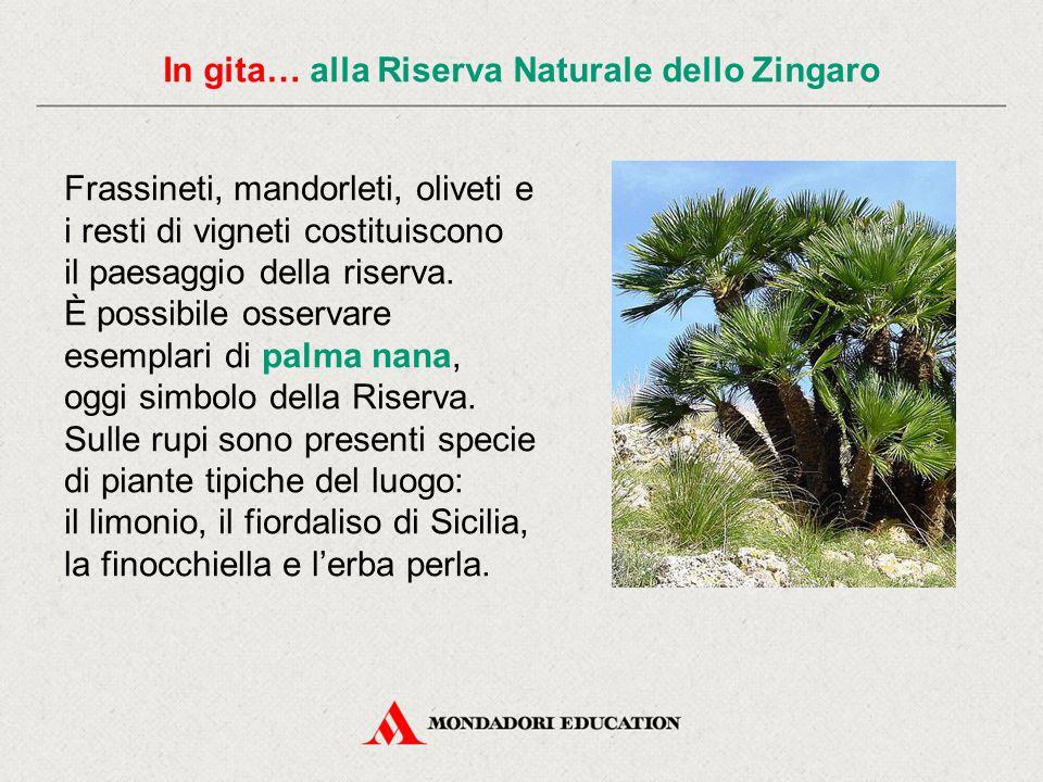 In gita… alla Riserva Naturale dello Zingaro Frassineti, mandorleti, oliveti e i resti di vigneti costituiscono il paesaggio della riserva. È possibil