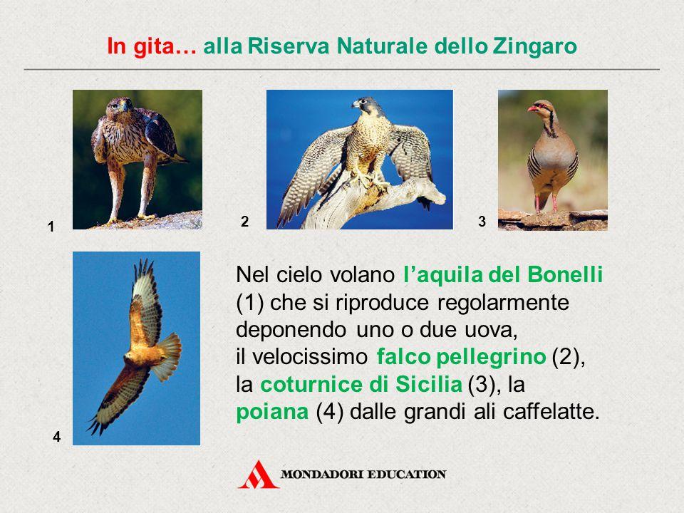 In gita… alla Riserva Naturale dello Zingaro Nel cielo volano l'aquila del Bonelli (1) che si riproduce regolarmente deponendo uno o due uova, il velo