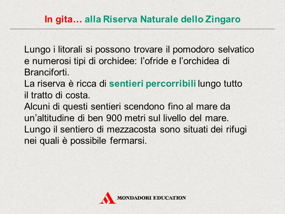 In gita… alla Riserva Naturale dello Zingaro Tra i rettili è diffusissimo il nero e lucido biacco e l'esclusiva lucertola siciliana, una specie esclusiva dell'isola che si può incontrare nella riserva in ogni stagione.