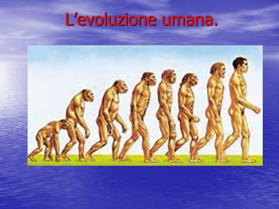 Australopithecus africanus È vissuto 3,7 milioni di anni fa e si è estinto 1,2 di milioni di anni fa.
