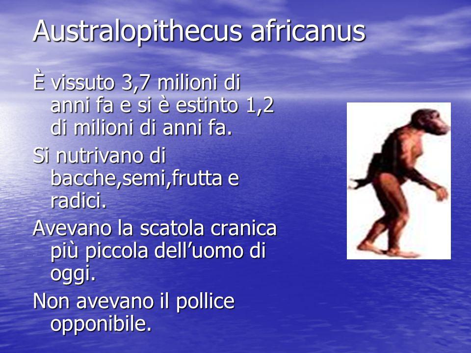 Australopithecus africanus È vissuto 3,7 milioni di anni fa e si è estinto 1,2 di milioni di anni fa. Si nutrivano di bacche,semi,frutta e radici. Ave
