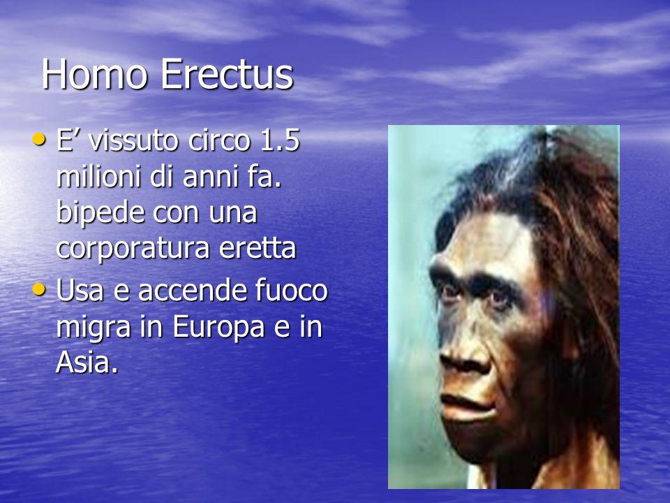 Homo Erectus E' vissuto circo 1.5 milioni di anni fa. bipede con una corporatura eretta E' vissuto circo 1.5 milioni di anni fa. bipede con una corpor