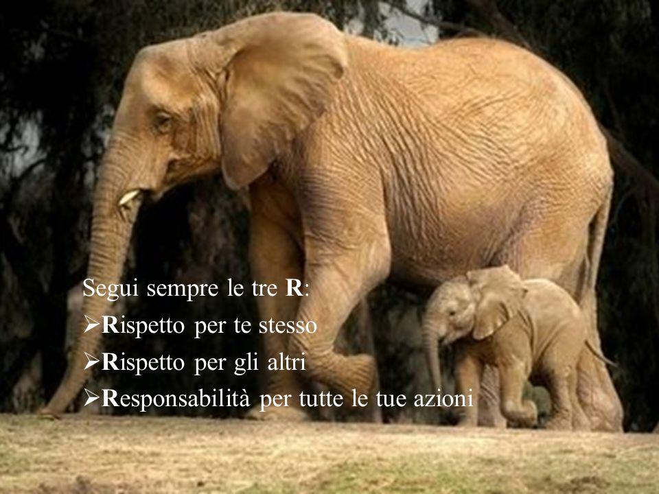 Segui sempre le tre R:  Rispetto per te stesso  Rispetto per gli altri  Responsabilità per tutte le tue azioni