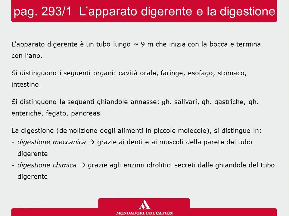 pag. 293/1 L'apparato digerente e la digestione L'apparato digerente è un tubo lungo ~ 9 m che inizia con la bocca e termina con l'ano. Si distinguono