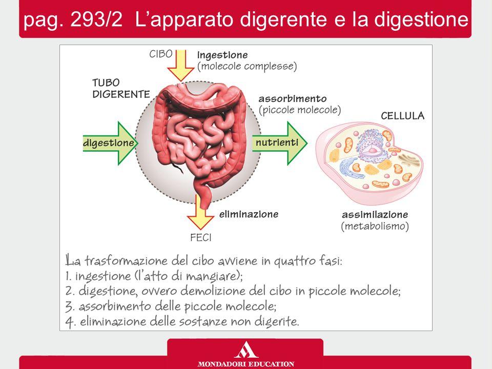 pag. 293/2 L'apparato digerente e la digestione