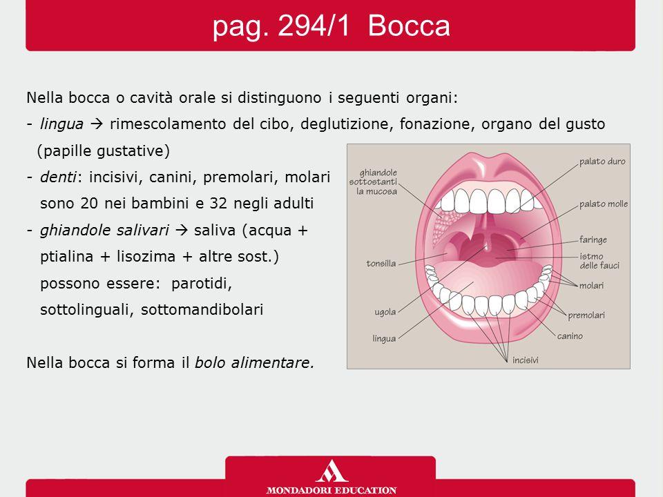Nella bocca o cavità orale si distinguono i seguenti organi: -lingua  rimescolamento del cibo, deglutizione, fonazione, organo del gusto (papille gus