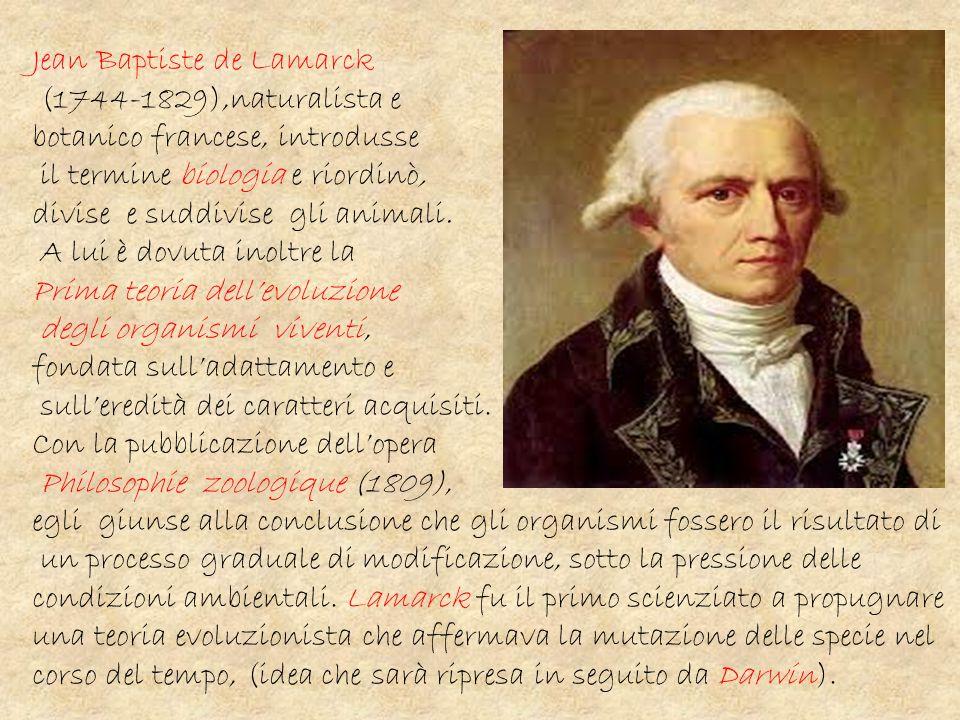 Jean Baptiste de Lamarck (1744-1829),naturalista e botanico francese, introdusse il termine biologia e riordinò, divise e suddivise gli animali. A lui