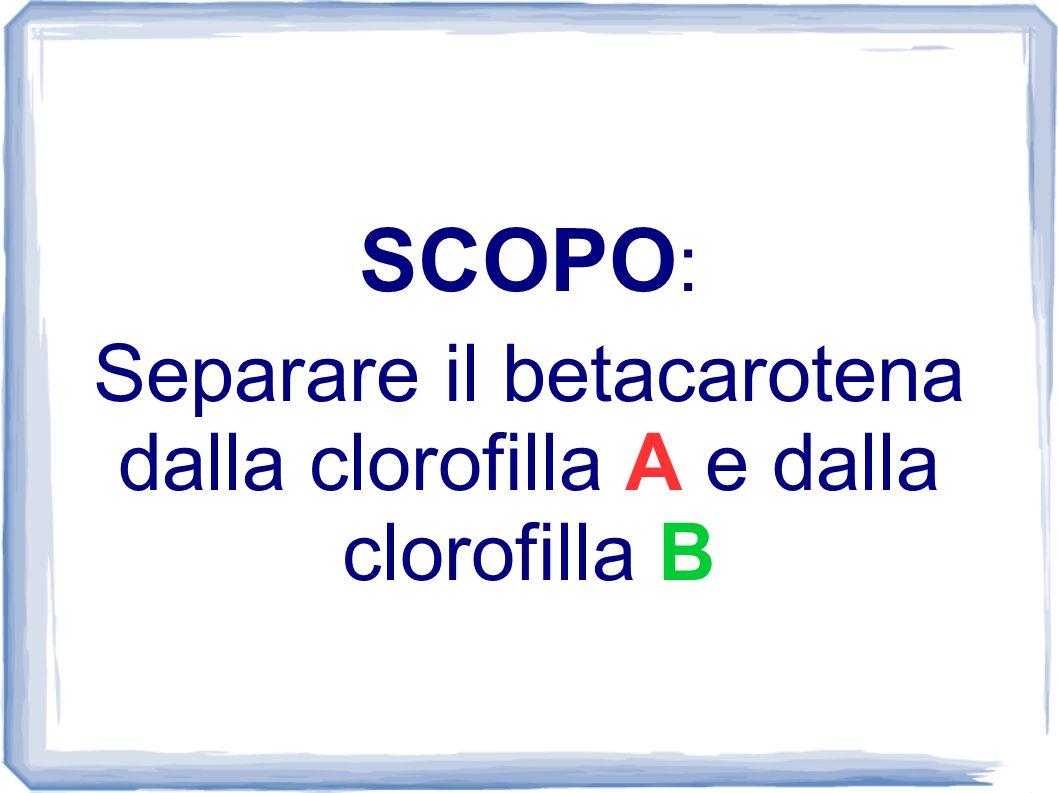 SCOPO : Separare il betacarotena dalla clorofilla A e dalla clorofilla B