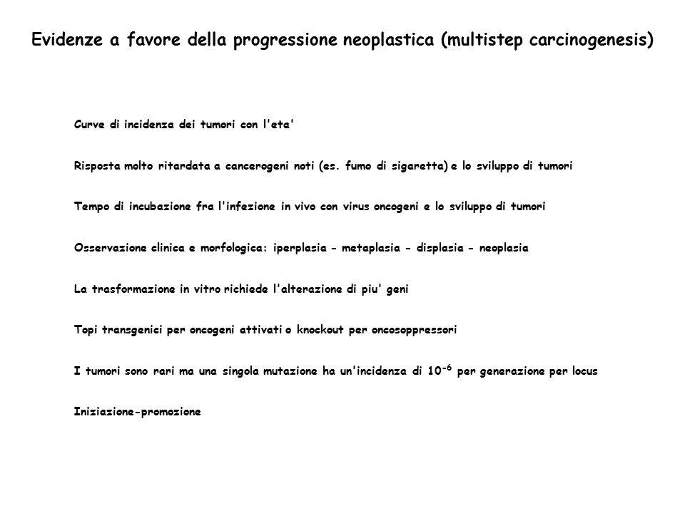 Evidenze a favore della progressione neoplastica (multistep carcinogenesis) Curve di incidenza dei tumori con l'eta' Risposta molto ritardata a cancer