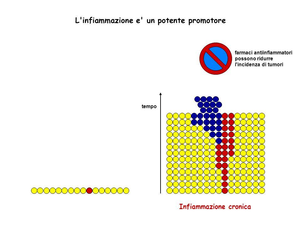 L'infiammazione e' un potente promotore Infiammazione cronica tempo farmaci antiinfiammatori possono ridurre l'incidenza di tumori