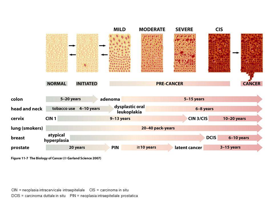 CIN = neoplasia intracervicale intraepiteliale CIS = carcinoma in situ DCIS = carcinoma duttale in situ PIN = neoplasia intraepiteliale prostatica
