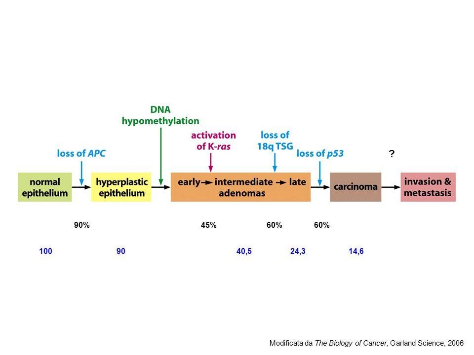 ? 90%45%60% Modificata da The Biology of Cancer, Garland Science, 2006 9040,510024,314,6
