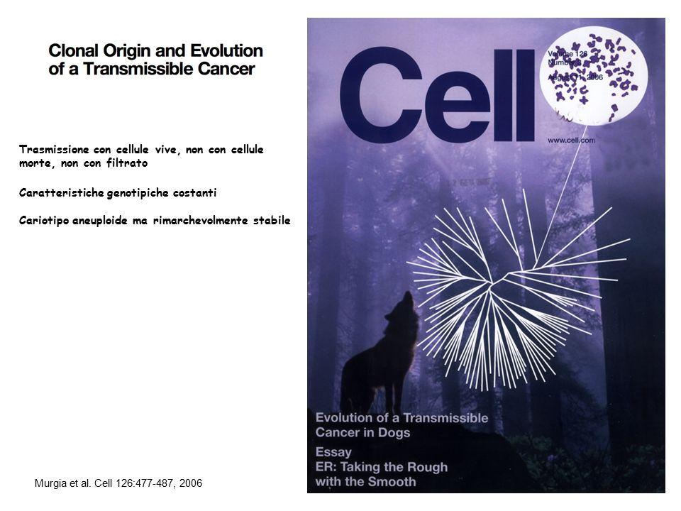 Caratteristiche genotipiche costanti Cariotipo aneuploide ma rimarchevolmente stabile Murgia et al. Cell 126:477-487, 2006 Trasmissione con cellule vi