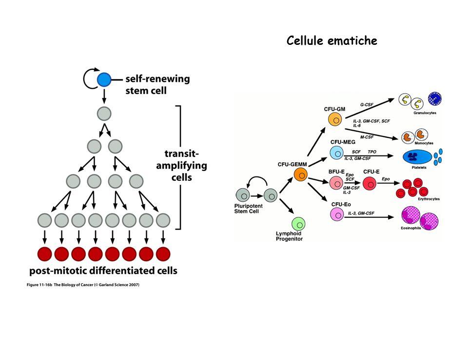 Cellule ematiche