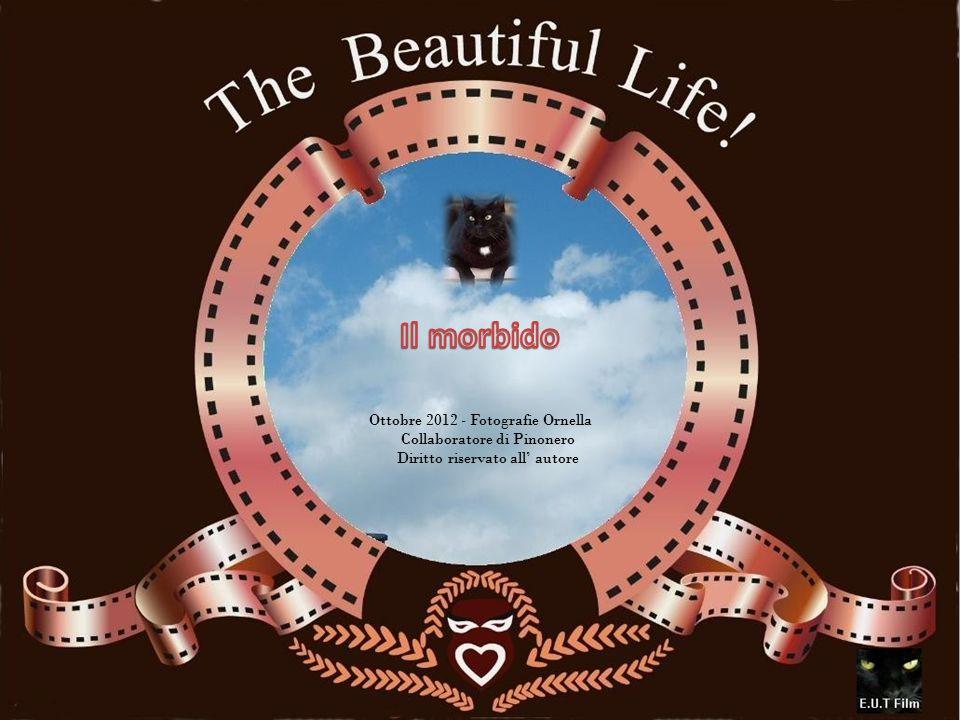 Ottobre 2012 - Fotografie Ornella Collaboratore di Pinonero Diritto riservato all' autore