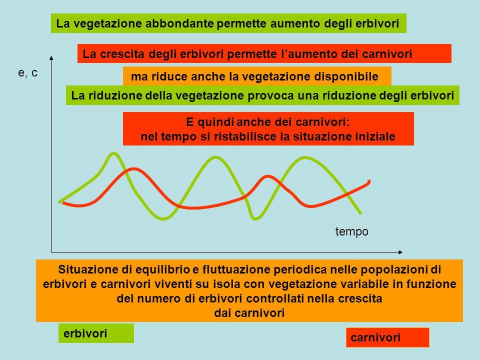 erbivori carnivori e, c tempo Situazione di equilibrio e fluttuazione periodica nelle popolazioni di erbivori e carnivori viventi su isola con vegetaz