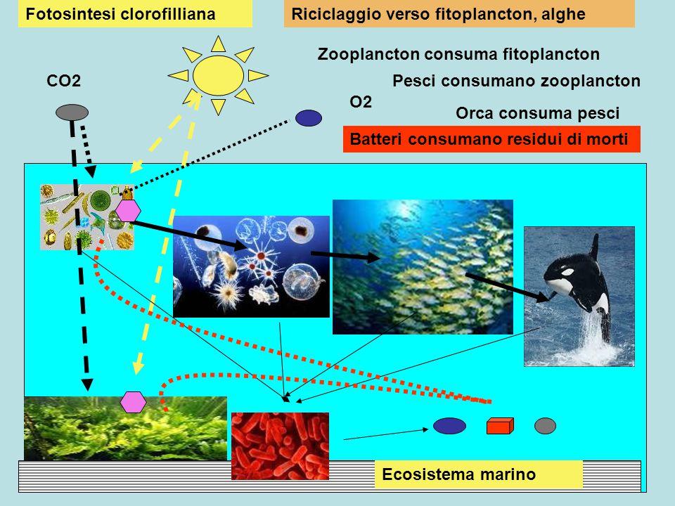 CO2 Ecosistema marino O2 Fotosintesi clorofilliana Zooplancton consuma fitoplancton Pesci consumano zooplancton Orca consuma pesci Batteri consumano r