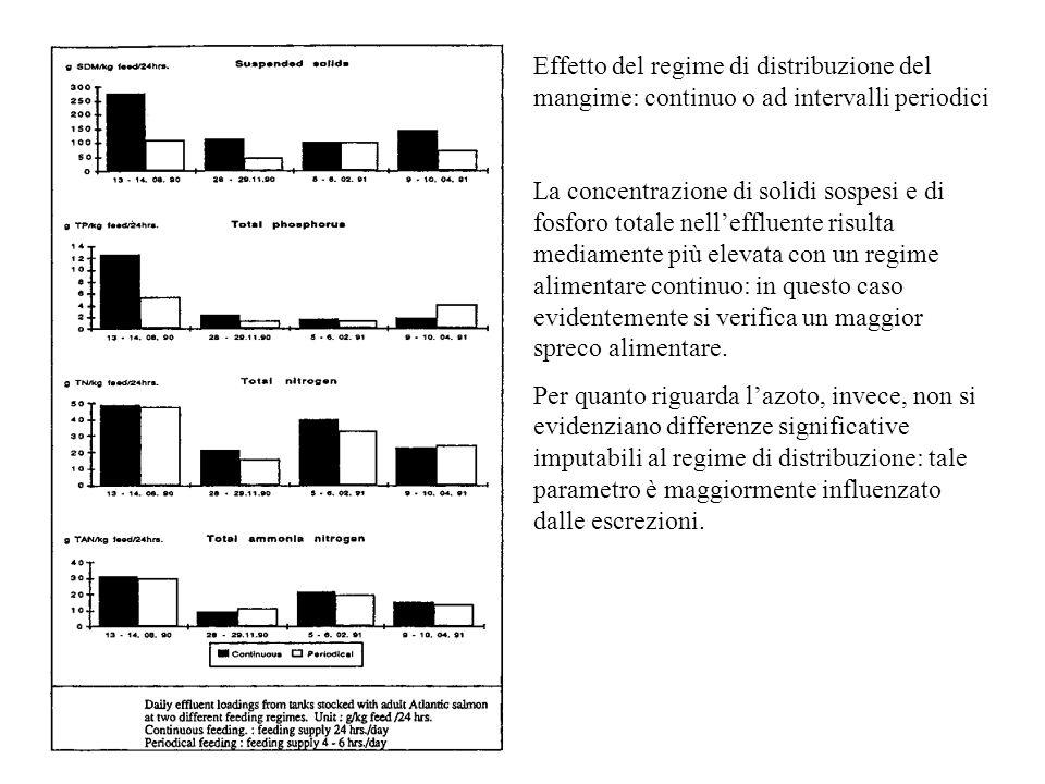 Effetto del regime di distribuzione del mangime: continuo o ad intervalli periodici La concentrazione di solidi sospesi e di fosforo totale nell'efflu