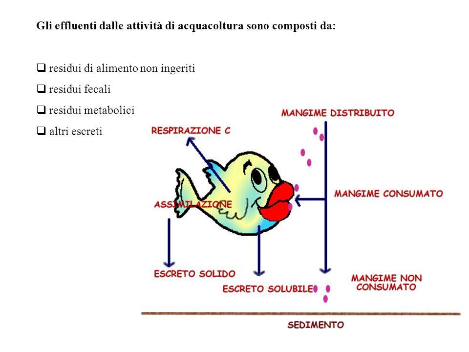 Gli effluenti dalle attività di acquacoltura sono composti da:  residui di alimento non ingeriti  residui fecali  residui metabolici  altri escret