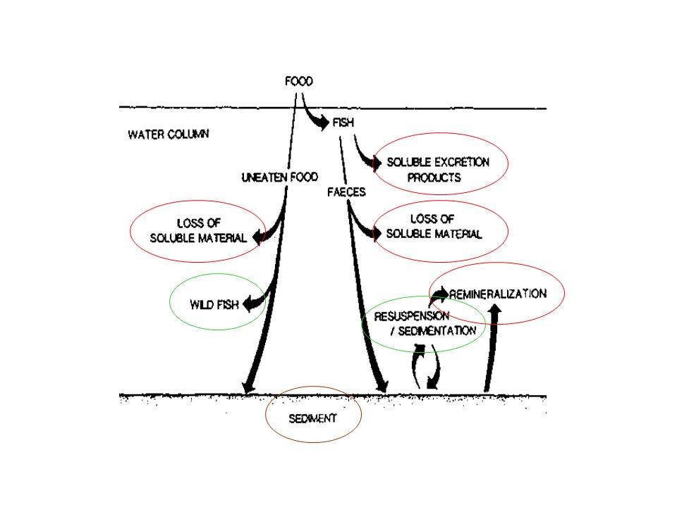 Beveridge ed Iwama (1991), ad esempio, propongono le seguenti relazioni che permettono di stimare la massa totale di sostanza organica derivante dalle frazioni mangime disperso e materiali fecali .