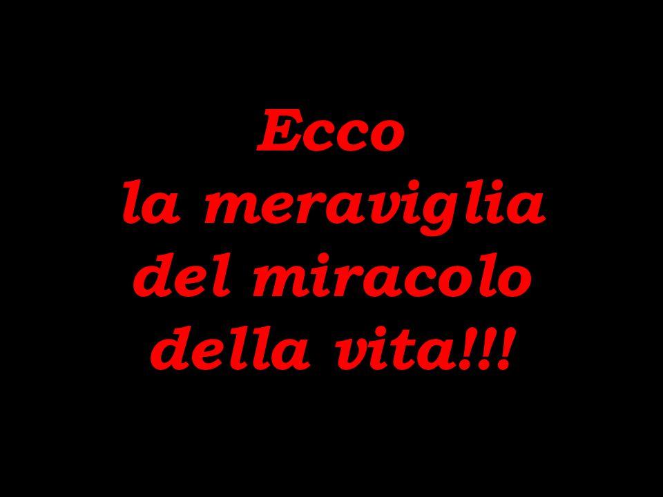 Ecco il miracolo della vita Ecco il miracolo della vita!!.