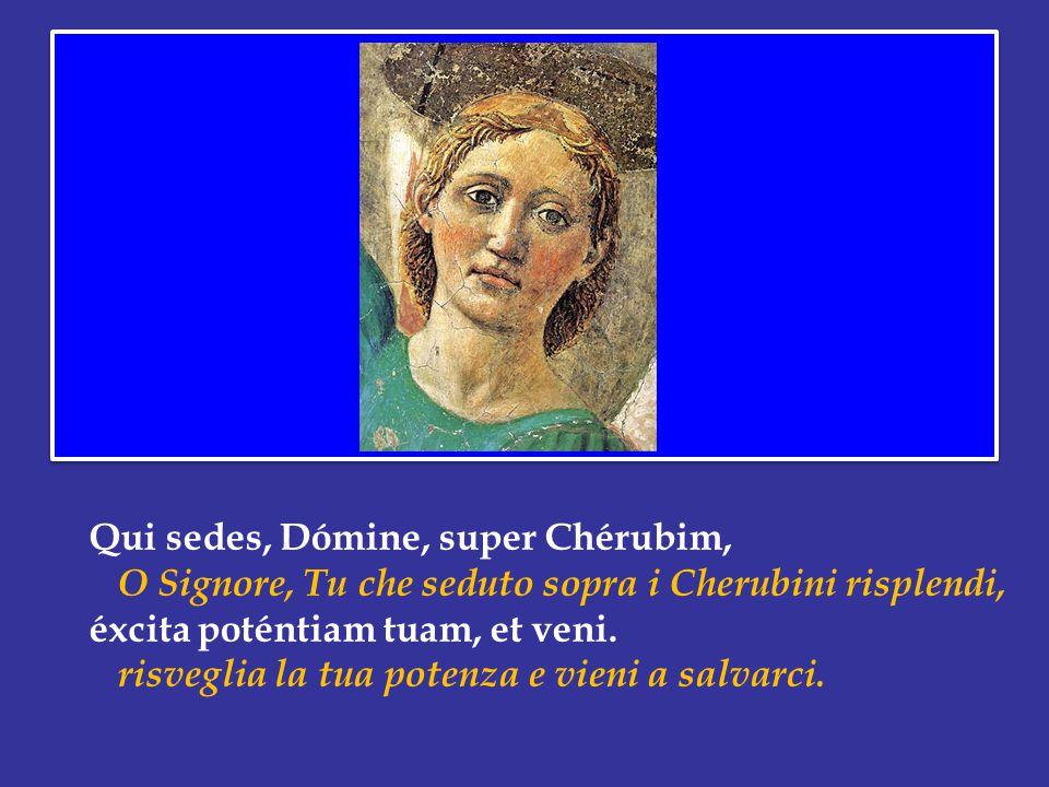 Qui sedes, Dómine, super Chérubim, O Signore, Tu che seduto sopra i Cherubini risplendi, éxcita poténtiam tuam, et veni.