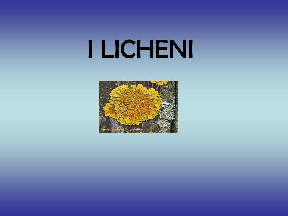 I LICHENI