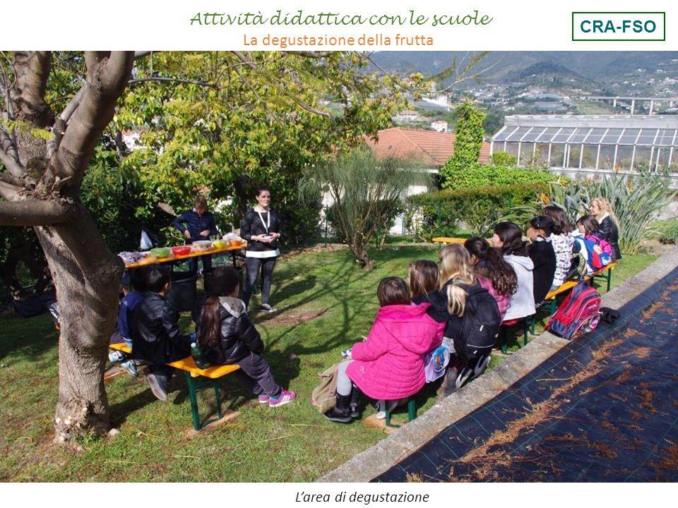 I giudizi dei bambini Attività didattica con le scuole La degustazione della frutta CRA-FSO