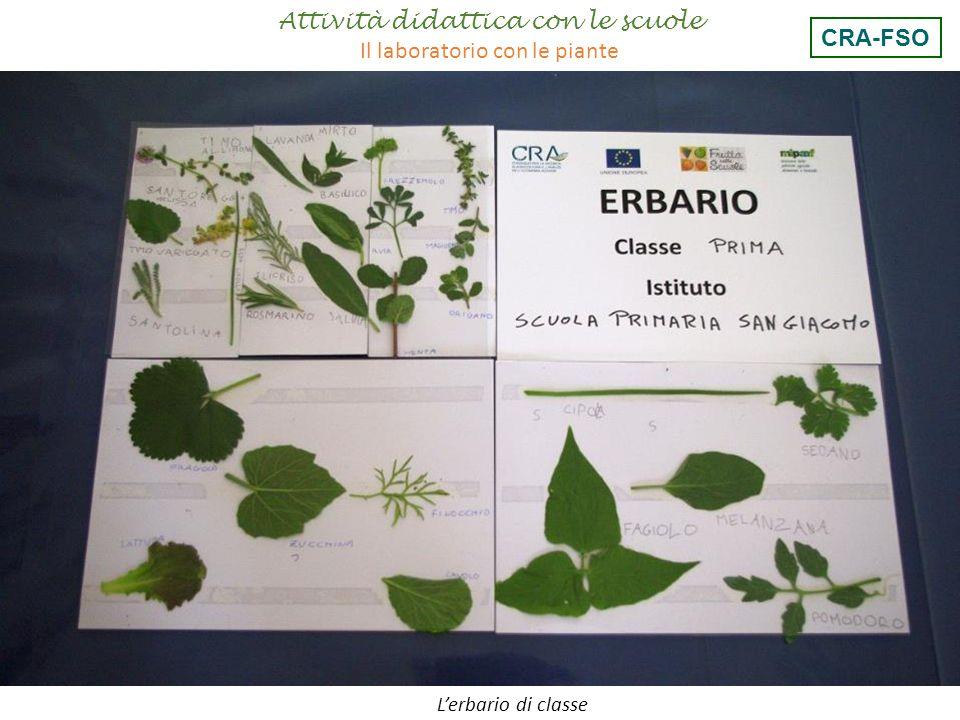 L'erbario di classe Attività didattica con le scuole Il laboratorio con le piante CRA-FSO