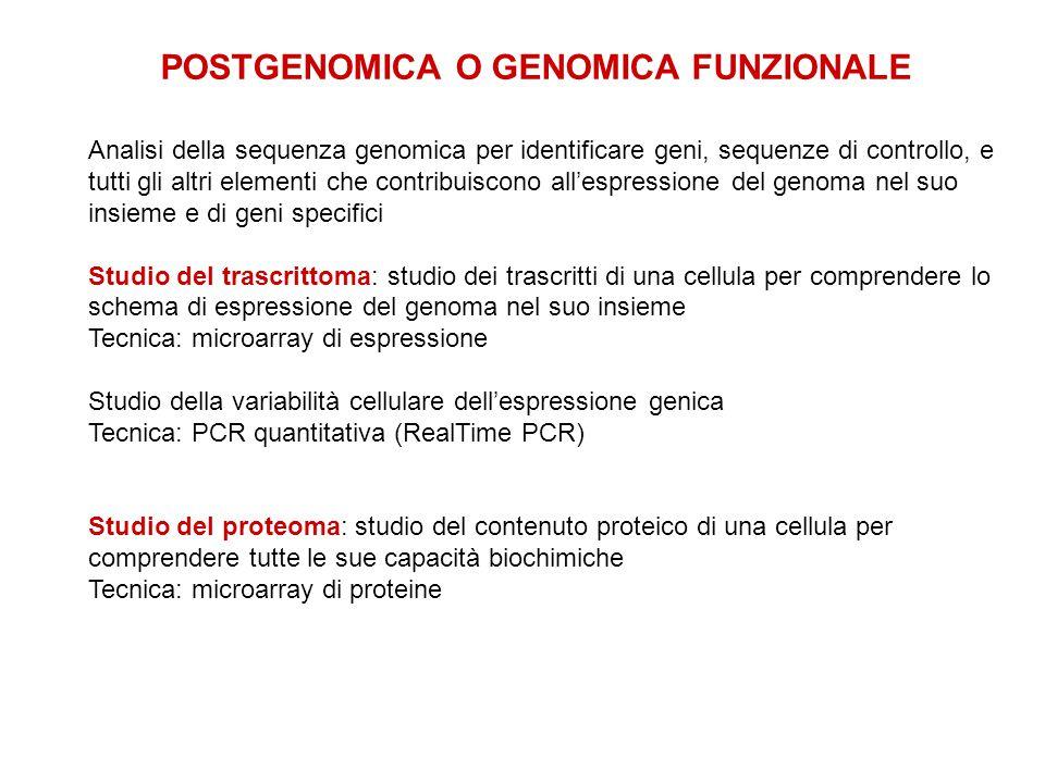 POSTGENOMICA O GENOMICA FUNZIONALE Analisi della sequenza genomica per identificare geni, sequenze di controllo, e tutti gli altri elementi che contri