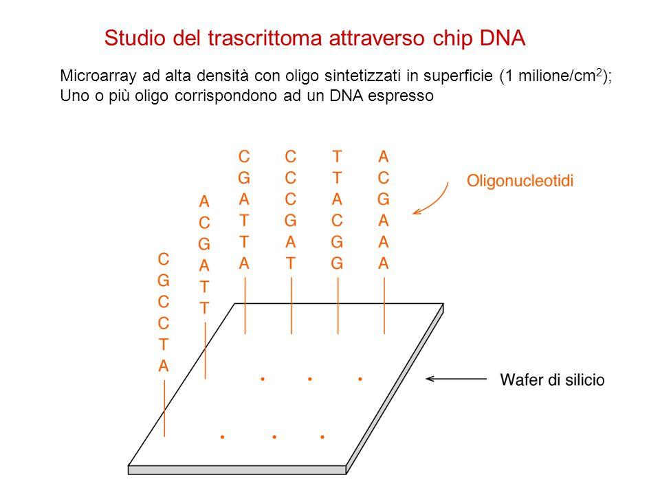 Studio del trascrittoma attraverso chip DNA Microarray ad alta densità con oligo sintetizzati in superficie (1 milione/cm 2 ); Uno o più oligo corrisp