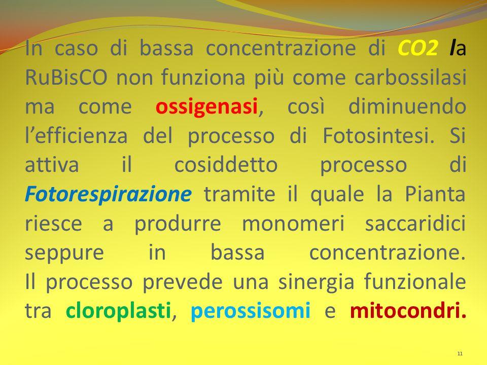 In caso di bassa concentrazione di CO2 la RuBisCO non funziona più come carbossilasi ma come ossigenasi, così diminuendo l'efficienza del processo di