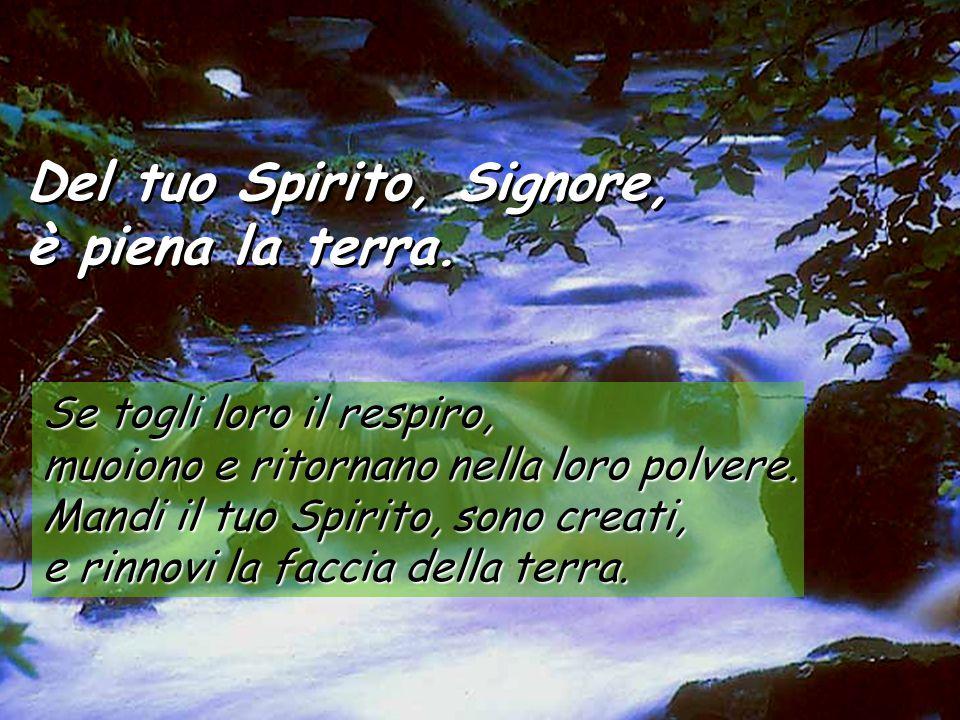 Salmo 103 Del tuo Spirito, Signore, è piena la terra. Del tuo Spirito, Signore, è piena la terra. Benedici il Signore anima mia, Signore, mio Dio, qua