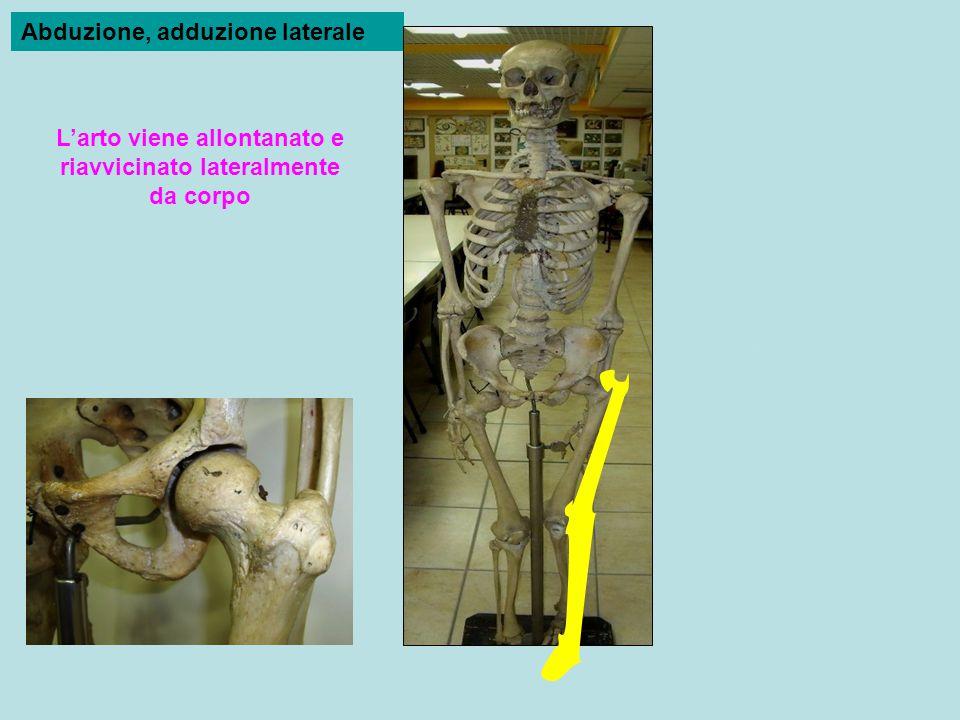 L'arto viene allontanato e riavvicinato lateralmente da corpo