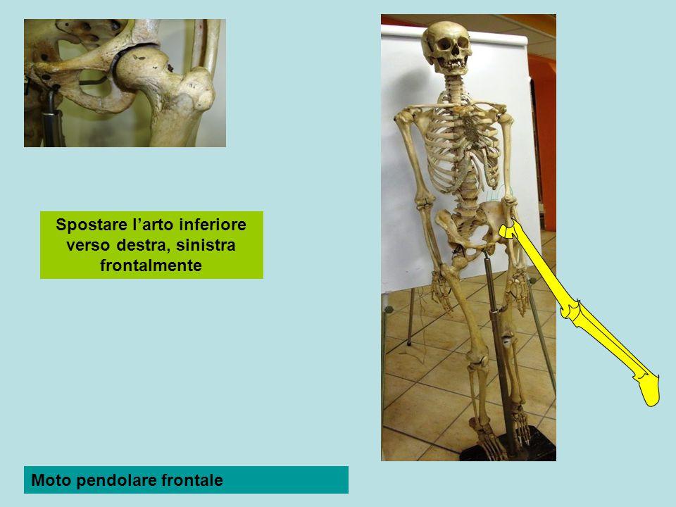 Articolazione temporo-mandibolare Condiloidea Condilo mandibolare > fossetta glenoidea temporale