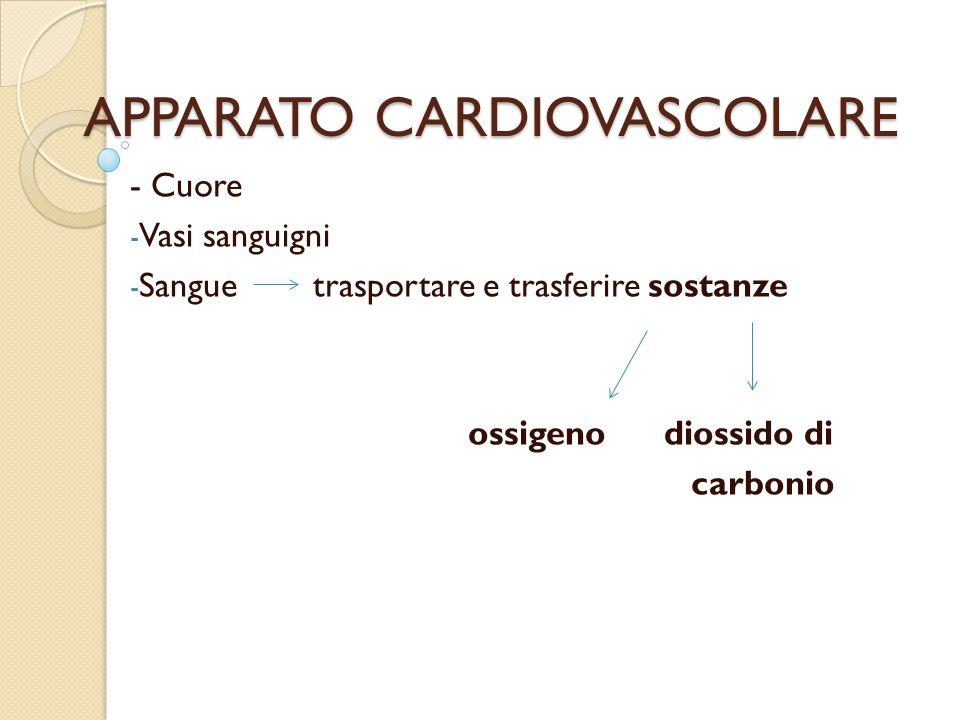 APPARATO CARDIOVASCOLARE - Cuore - Vasi sanguigni - Sangue trasportare e trasferire sostanze ossigeno diossido di carbonio