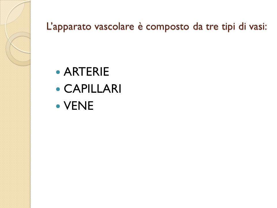 L'apparato vascolare è composto da tre tipi di vasi: ARTERIE CAPILLARI VENE