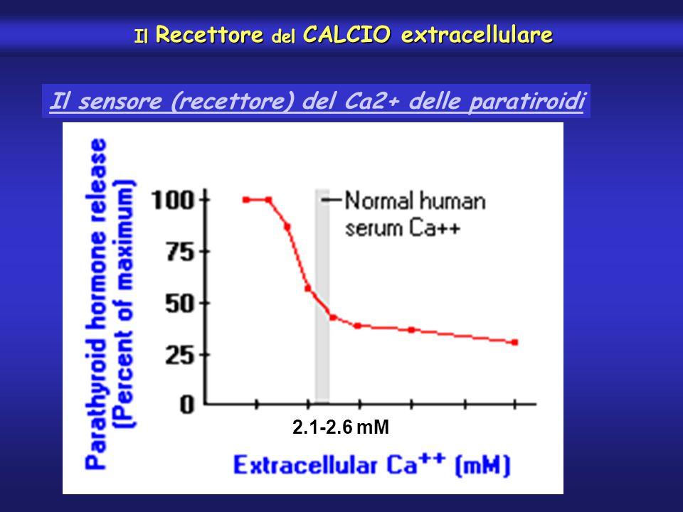 Il Recettore del CALCIO extracellulare Il Recettore del CALCIO extracellulare Il sensore (recettore) del Ca2+ delle paratiroidi 2.1-2.6 mM