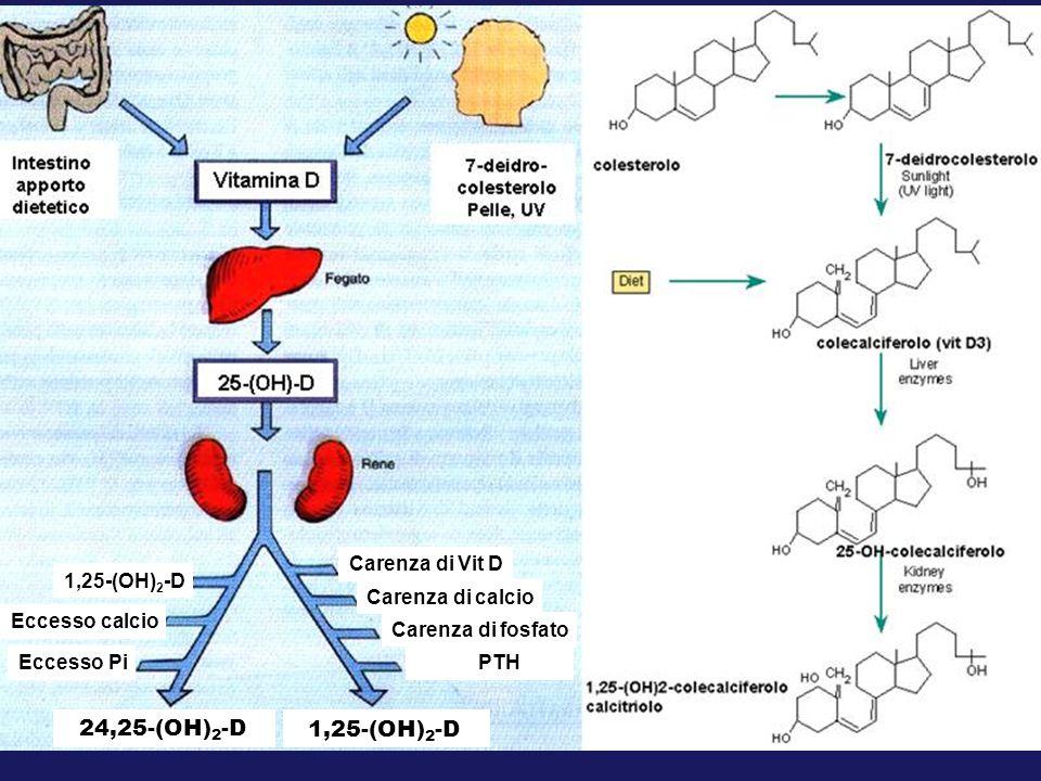 Carenza di Vit D Carenza di calcio Carenza di fosfato PTH Eccesso calcio Eccesso Pi 1,25-(OH) 2 -D 24,25-(OH) 2 -D
