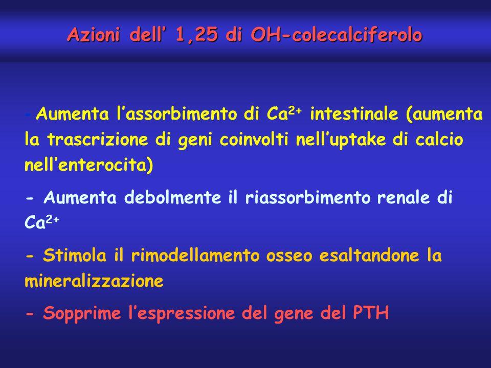 - Aumenta l'assorbimento di Ca 2+ intestinale (aumenta la trascrizione di geni coinvolti nell'uptake di calcio nell'enterocita) - Aumenta debolmente i