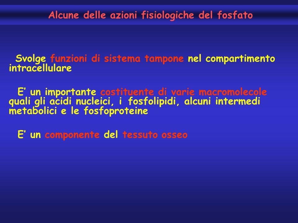Svolge funzioni di sistema tampone nel compartimento intracellulare E' un importante costituente di varie macromolecole quali gli acidi nucleici, i fo