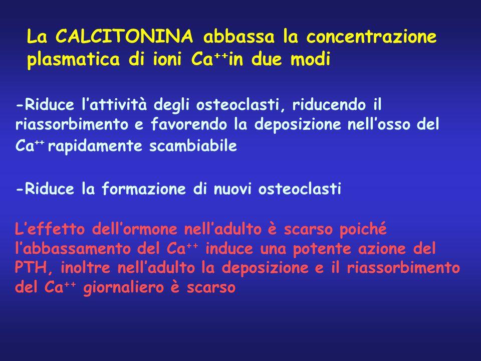 La CALCITONINA abbassa la concentrazione plasmatica di ioni Ca ++ in due modi -Riduce l'attività degli osteoclasti, riducendo il riassorbimento e favo