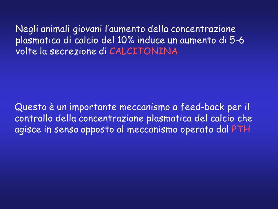 Negli animali giovani l'aumento della concentrazione plasmatica di calcio del 10% induce un aumento di 5-6 volte la secrezione di CALCITONINA Questo è