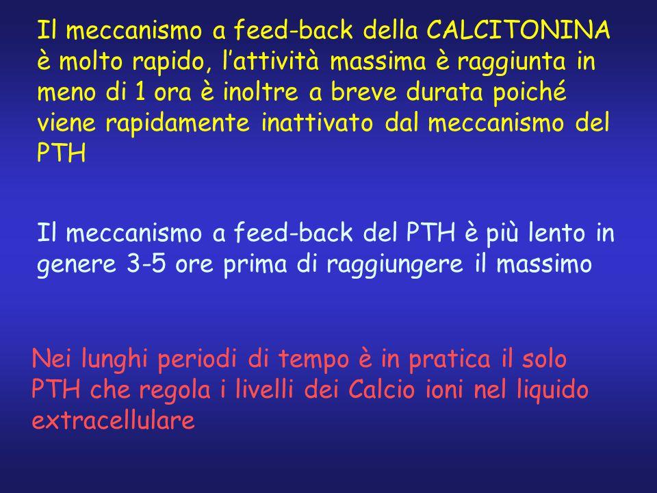 Il meccanismo a feed-back della CALCITONINA è molto rapido, l'attività massima è raggiunta in meno di 1 ora è inoltre a breve durata poiché viene rapi