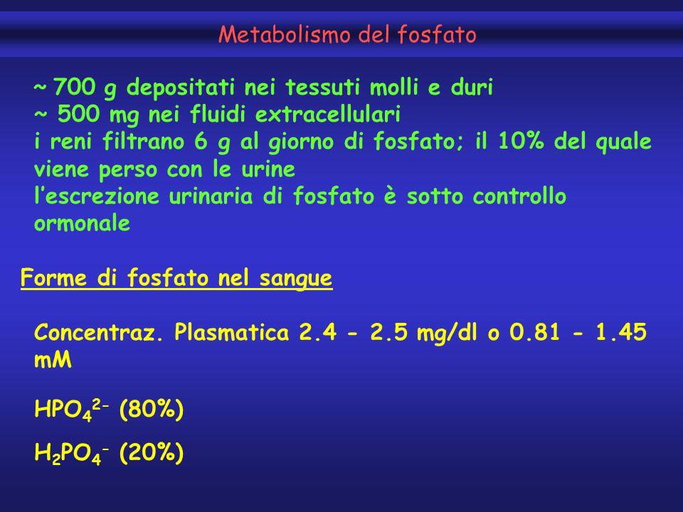 Metabolismo del fosfato ~ 700 g depositati nei tessuti molli e duri ~ 500 mg nei fluidi extracellulari i reni filtrano 6 g al giorno di fosfato; il 10