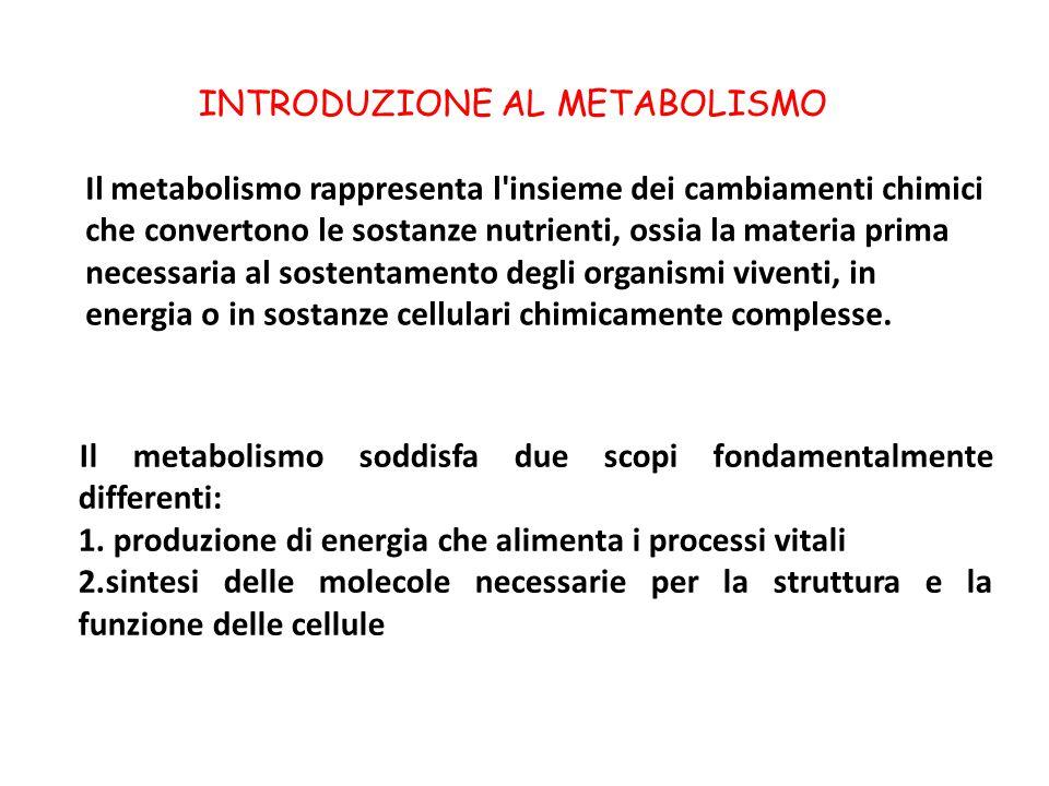 INTRODUZIONE AL METABOLISMO Il metabolismo rappresenta l insieme dei cambiamenti chimici che convertono le sostanze nutrienti, ossia la materia prima necessaria al sostentamento degli organismi viventi, in energia o in sostanze cellulari chimicamente complesse.