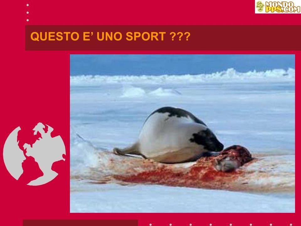 IN CANADA ESISTE UNA NUOVA FORMA DI TURISMO, ANCHE IN NORVEGIA: UCCIDERCI!!!
